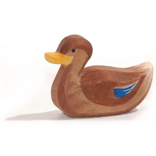 Ostheimer Eend zwemmend