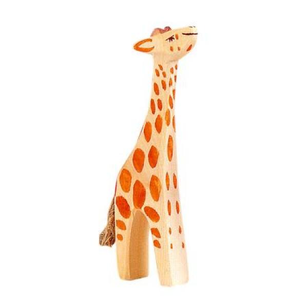 Ostheimer Giraffe klein omhoog kijkend